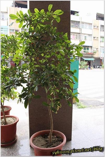 小圆叶子绿色盆栽植物